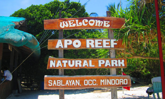 Sablay Sa Sablayan: The (Un) Sublime Underwater Experience in Apo Reef Marine Sanctuary