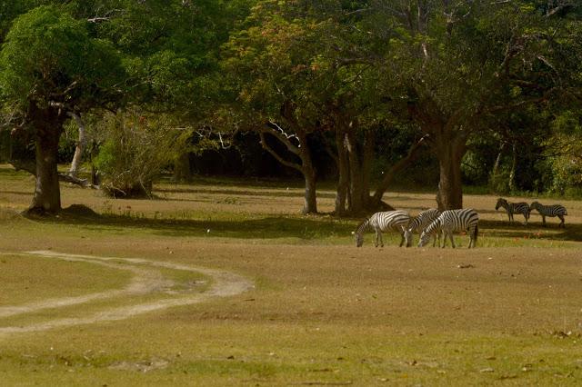 Calauit Safari Tour | Coron, Palawan