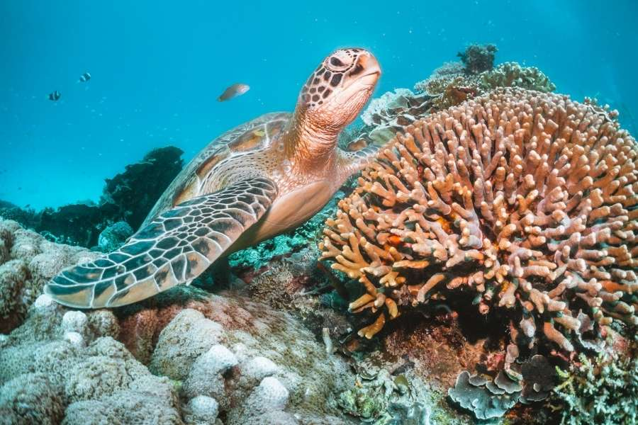 10 Best Spots For Diving and Snorkeling in The Philippines