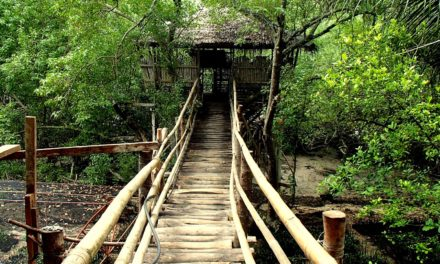 WHERE TO STAY IN SIQUIJOR: Guiwanon Spring Park: Not Your Ordinary Place