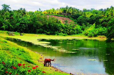 Samal Island: Tagbabo Falls and Monfort Bat Colony